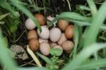 Keine Eier, neue Runde