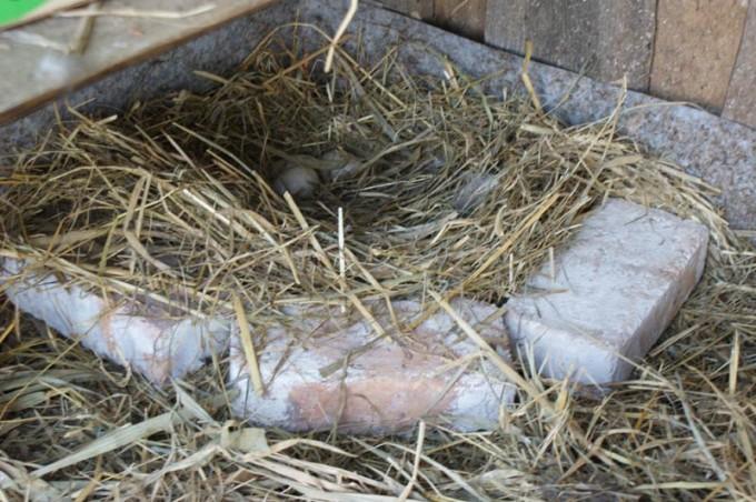 enten-flugenten-eier-flugenteneier-02