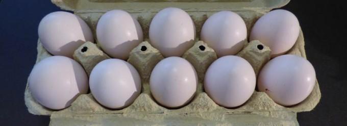 maran marans ei eier lachshuhn lachshuhneier 3