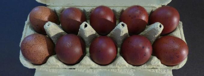 maran marans ei eier lachshuhn lachshuhneier 4