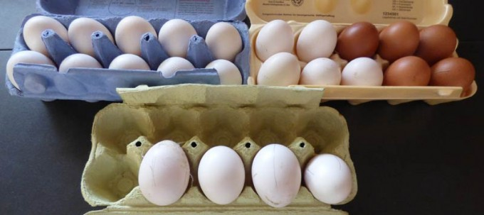 vorwerk Huhn Lachshuhn Eier EiMarans Maran 02