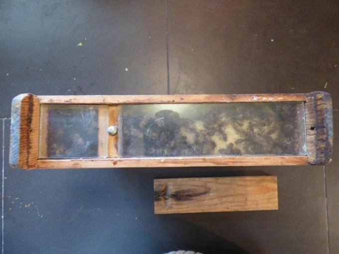 eks bienenvolk koenigin bienenkoenigin 2
