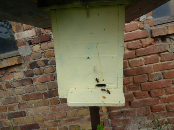 eks bienenvolk koenigin bienenkoenigin 5