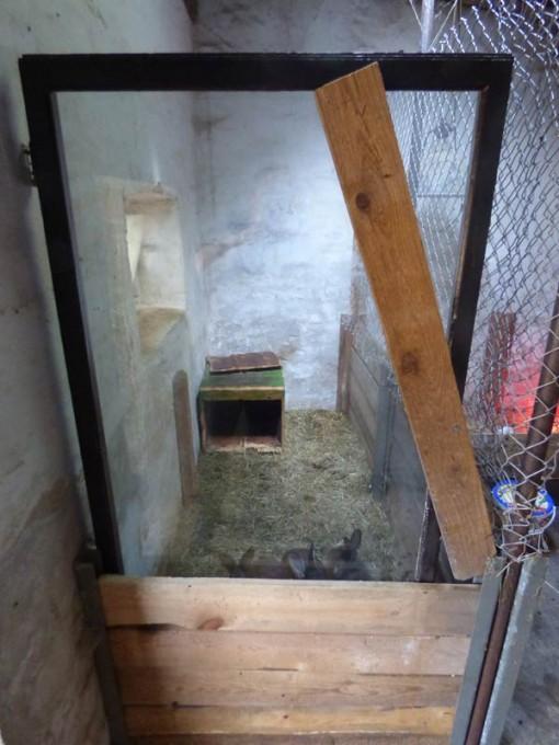 kaninchen tiefstreu stall boxenstall 01
