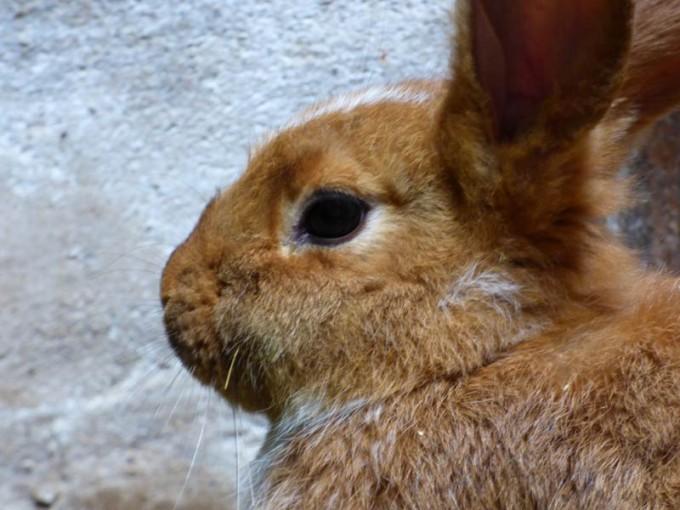kaninchen tiefstreu stall boxenstall 03