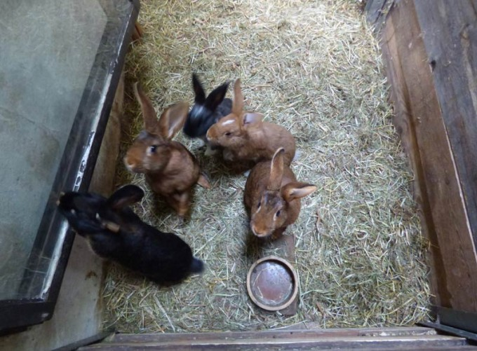 kaninchen tiefstreu stall boxenstall 04