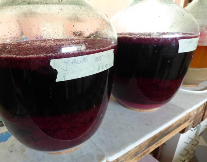 wein aus johannisbeeren schwarz schwarze Johannisbeerwein rezept selber machen 1
