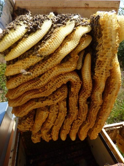 wildbau bienen waben honig ohne schleuder 01 pimp my bauernhof. Black Bedroom Furniture Sets. Home Design Ideas