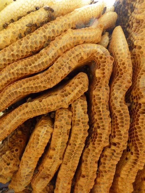 wildbau bienen waben honig ohne schleuder 02 pimp my bauernhof. Black Bedroom Furniture Sets. Home Design Ideas