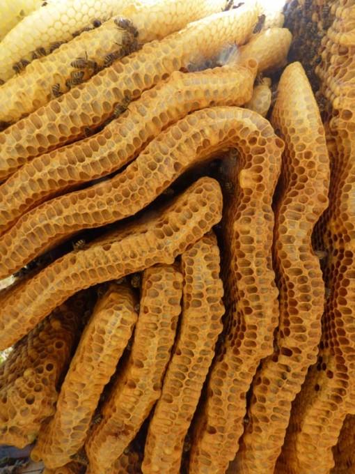 wildbau bienen waben honig ohne schleuder 03