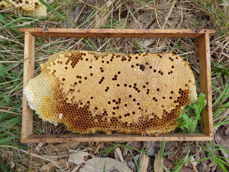 wildbau bienen waben honig ohne schleuder 04 pimp my bauernhof. Black Bedroom Furniture Sets. Home Design Ideas