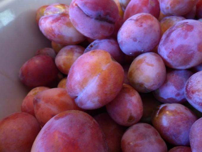eierpflaume marunke wein marunkenwein eierpflaumen wein rezept 01