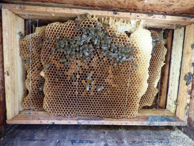 wildbau bienen beute 1