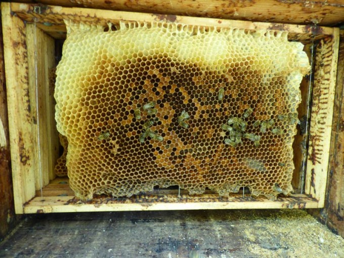 wildbau bienen beute 2