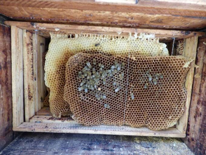 wildbau bienen beute 3