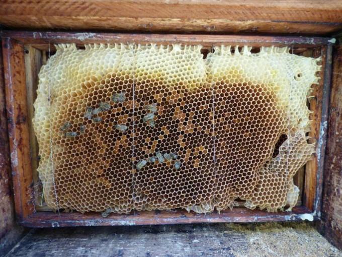 wildbau bienen beute 4
