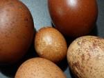 Eier sammeln macht immer Spaß