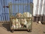Müllkutsche