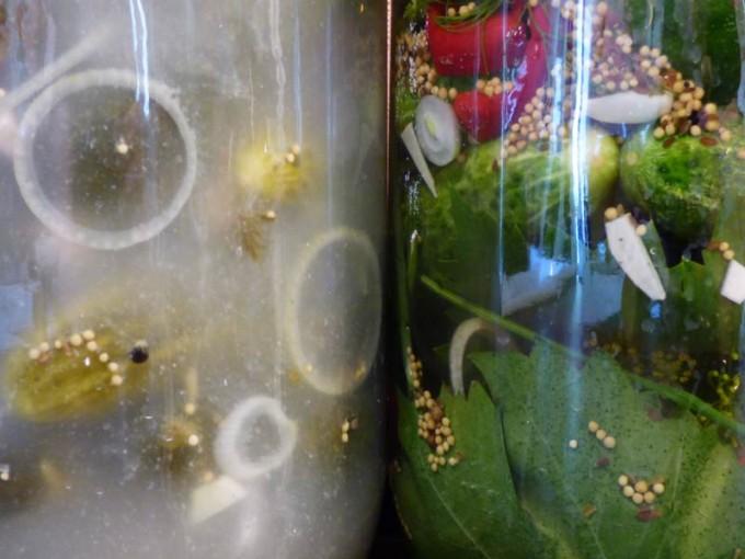 saure gurken selber machen rezept bilder  5