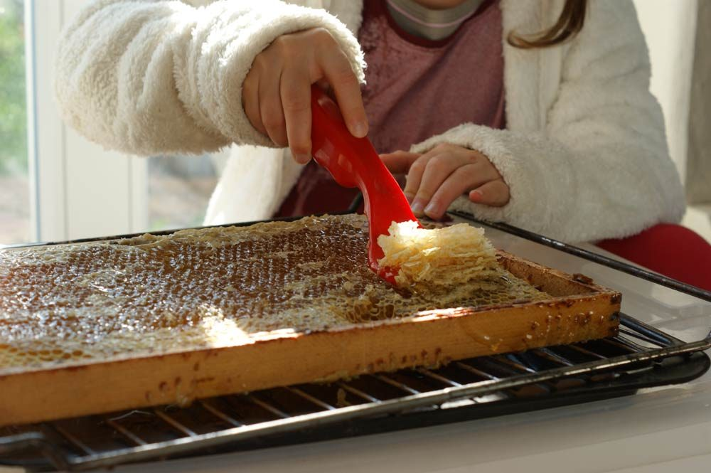 honig kinder bienen halten ertrag 1