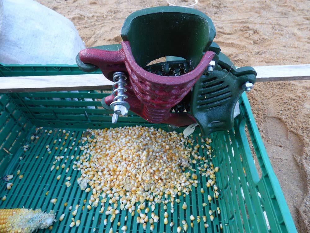 maisrebelmaschine-mais-popcorn-selber-machen-mais-maiskolben-01
