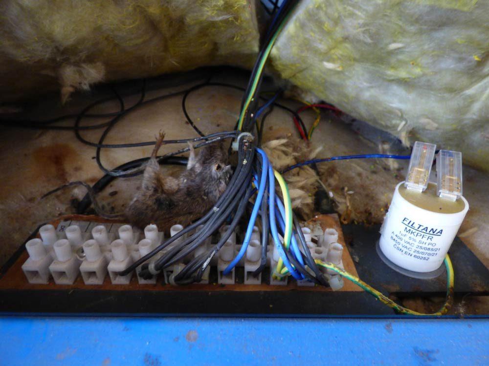 maus-heizung-kondensator-kessel-holzvergaser-2