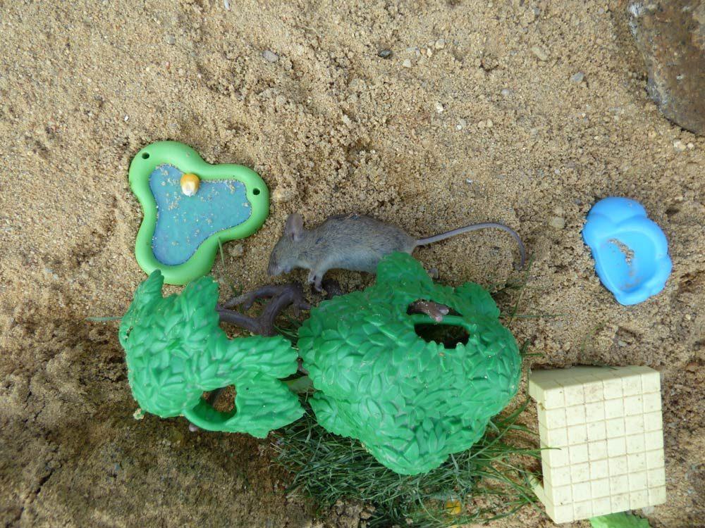 maus-sandkasten-tot-playmobil-spielzeug-2