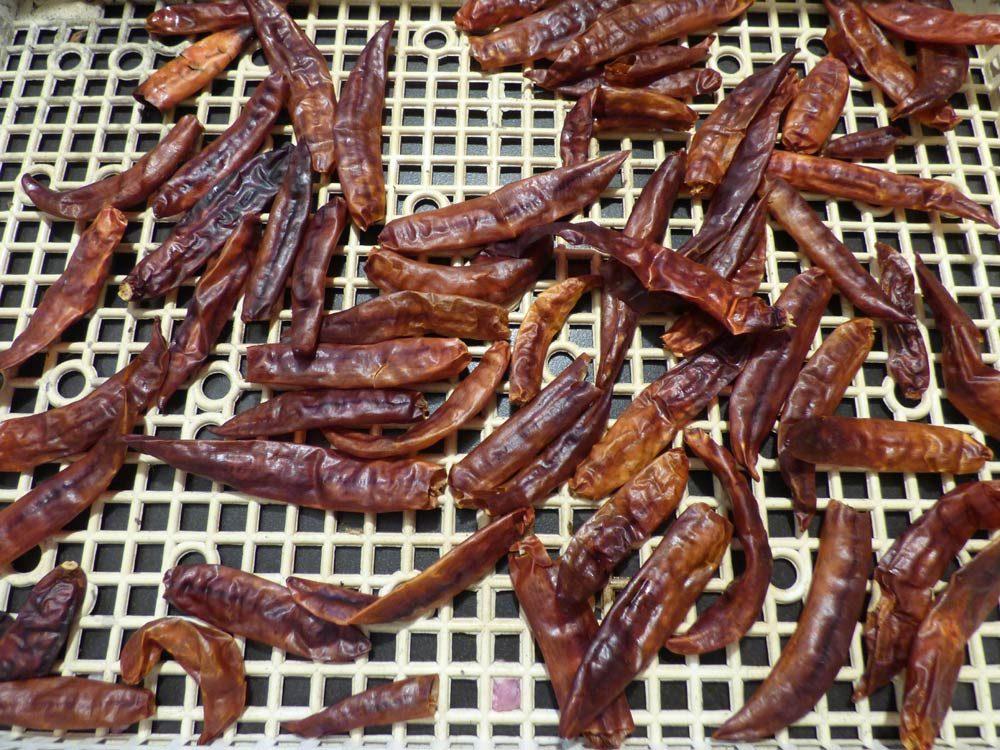 chorizo-pimenta-de-la-vera-selber-machen-rezept-luftgetrocknet-schweineschulter-bauchspeck-4