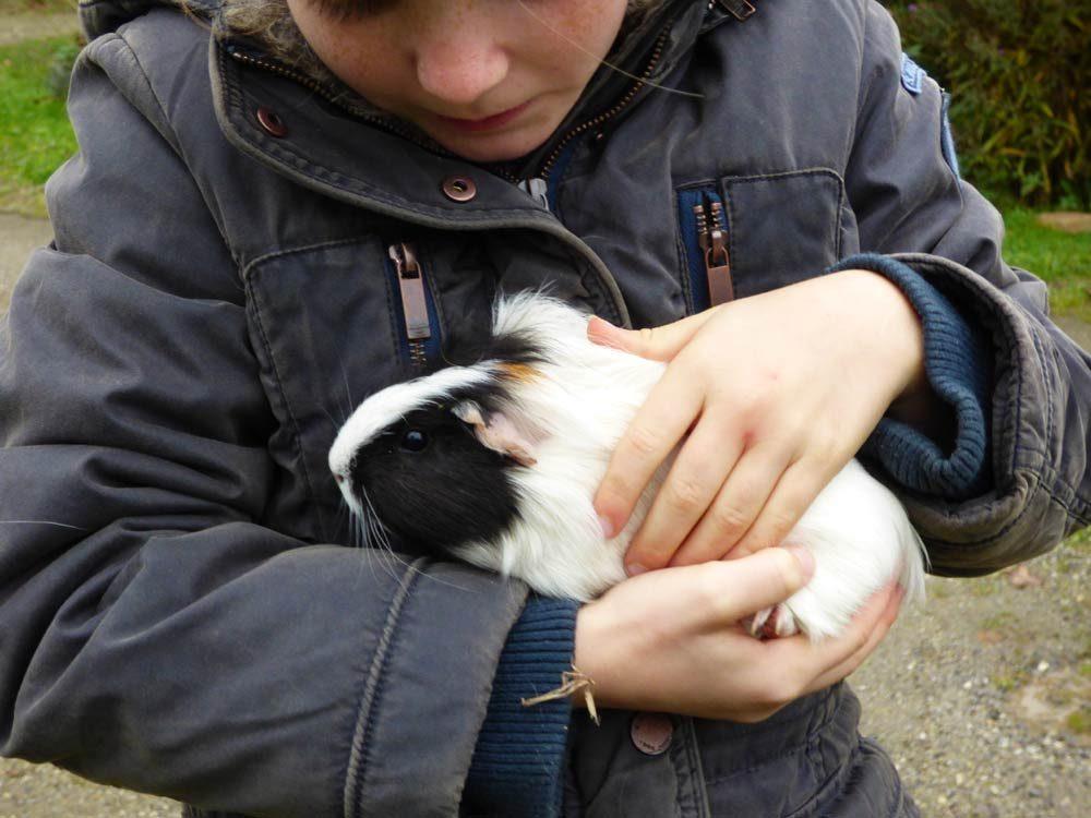 kinder-meerschweinchen-kaemmmen-weiss-3