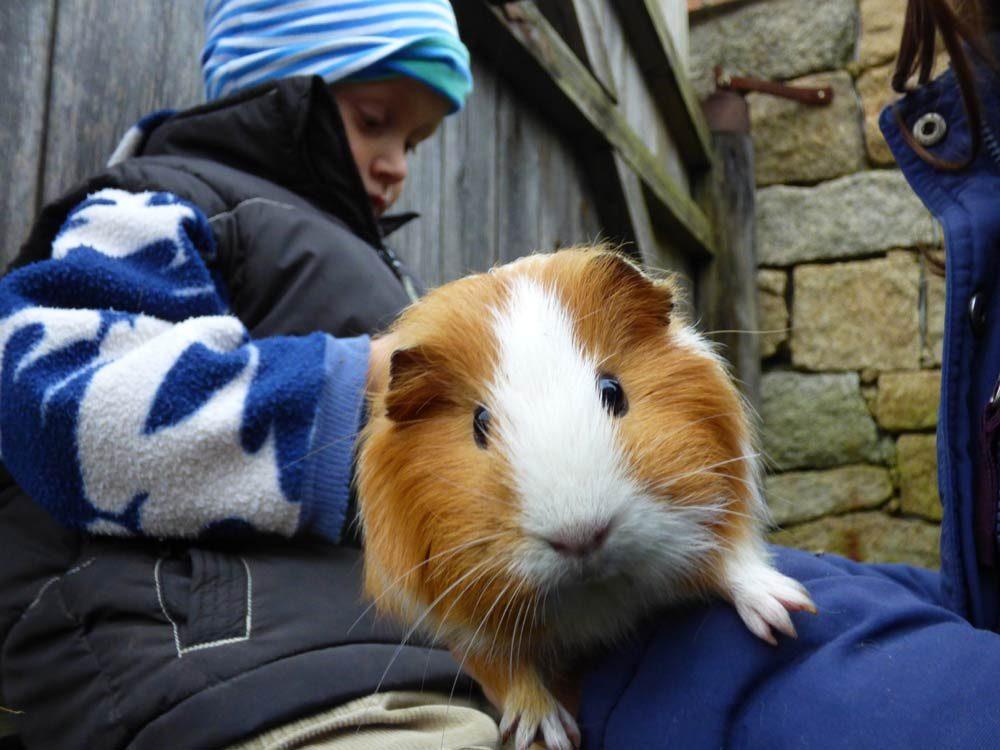 kinder-meerschweinchen-kaemmmen-weiss-4