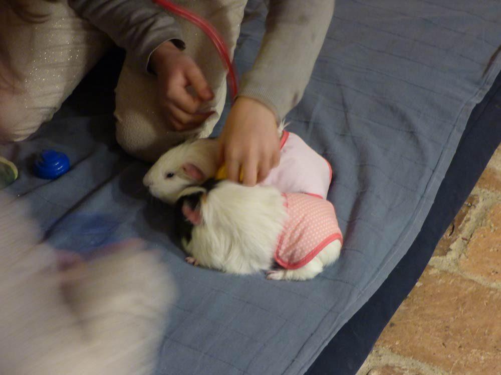 baby-born-windel-meerschwein-doktor-kinder-2