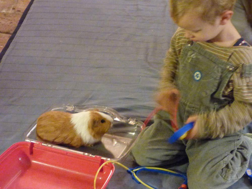 baby-born-windel-meerschwein-doktor-kinder-3