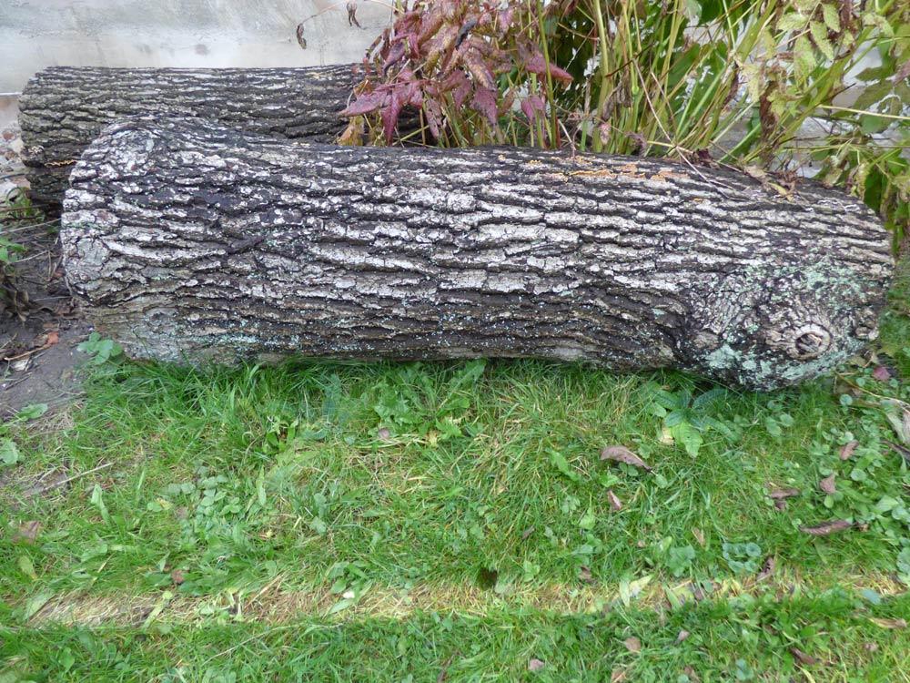 eiche-saegen-bretter-stirnholz-versiegeln-1