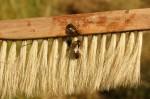 Wir basteln uns ein Bienenvolk