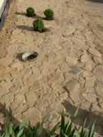 Heute im Angebot: Buchsbaum in Natursteinfläche